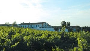 view of the vineyards of the wine region of Palmela Arrabida Portugal