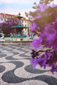 close up of bougainvillea in the rossio square in Lisbon